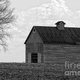 Alan Look - Barn and Tree in Black and White