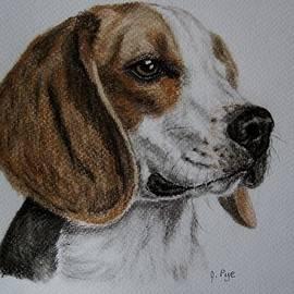 Joan Pye - Beagle