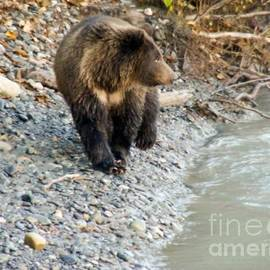 Dora Miller - Bear At The River