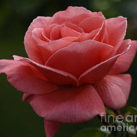 Bob Christopher - Beauty Of A Rose