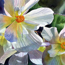 Sharon Freeman - Begonia with Rainbow Shadows