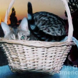 Phyllis Kaltenbach - Bengal Cat at Sunset