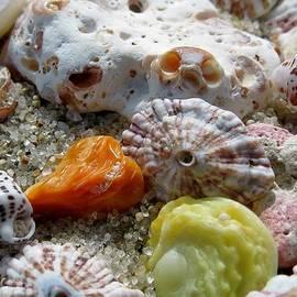 Janice Drew - Bermuda beach shells