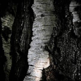 Odd Jeppesen - Birch Abstraction