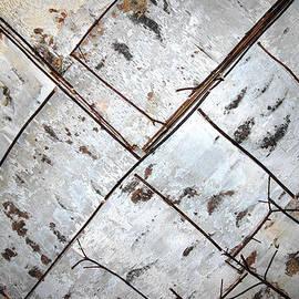 LeeAnn McLaneGoetz McLaneGoetzStudioLLCcom - Birch Bark Abstract