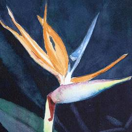 Charlotte Hickcox - Bird of Paradise