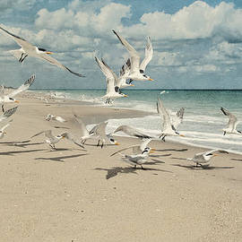 Cheryl Davis - Birds In Flight