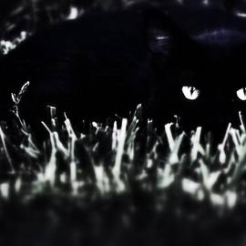 Tim Thoms - Black Cat