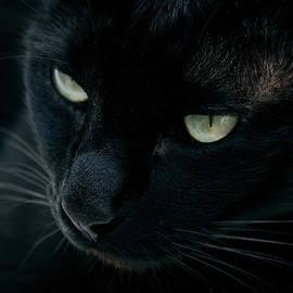 Laura Melis - Black panther