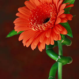 Inspired Nature Photography By Shelley Myke - Blooming with Joy