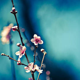 Neil Ratnavira - Blossom Blues