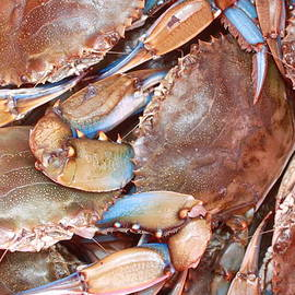 Glenda Brunette - Blue Crabs