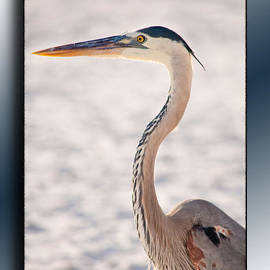 Christine Stonebridge - Blue Heron Rhapsody