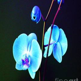 Doris Wood - Blue Orchids