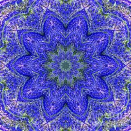 Carol F Austin - Blue Purple Lavender Floral Design Kaleidoscope