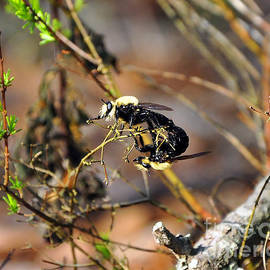 Al Powell Photography USA - Breeding Bees
