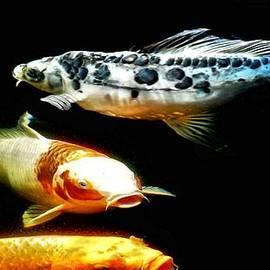 Don Mann - Bright Colored Fish