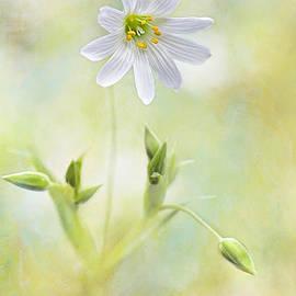 Jacky Parker - Bring me sunshine