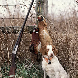 Daniel Dempster - Brittany and Pheasants - FS000757b