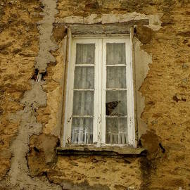 Lainie Wrightson - Broken Window