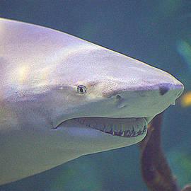 Paul Svensen - Bull Shark Head