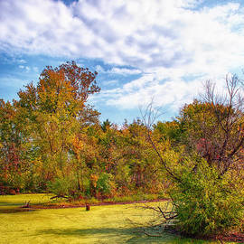Bill Tiepelman - Busch Wildlife Swampy Autumn - 2