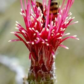 Meagan Suedkamp - Busier Bee