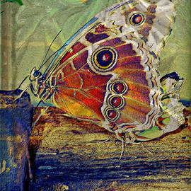 Mindy Newman - Butterfly Abstract
