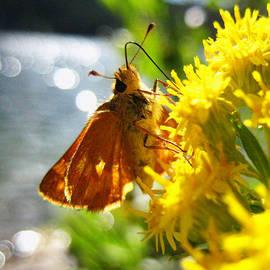Kathy Bassett - Butterfly Day