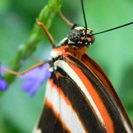 Brandy Fenenga - Butterfly Eye