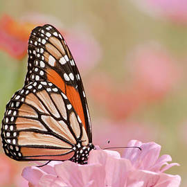 Regina Geoghan - Butterfly Garden IV