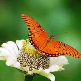 Meeli Sonn - Butterfly on flower