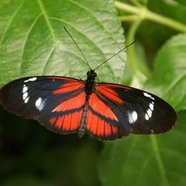 Kenric A Prescott - Butterfly Rest