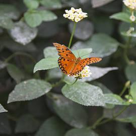 Theodore Jones - Butterfly
