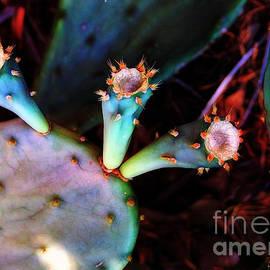 Judi Bagwell - Cactus