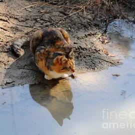 Al Powell Photography USA - Calico Cat Reflection