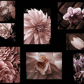 Ann Powell - Cameo Pink flower photo collage