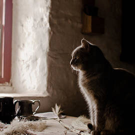 Swift Family - Cat at the Window