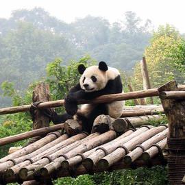 Carla Parris - Chengdu Panda