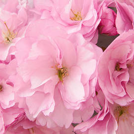 Regina Geoghan - Cherry Blossoms Pink II