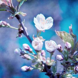 Viaina     - Cherry Blossoms