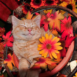 Chantal PhotoPix - Cheshire Cat Dreaming of Catching Mice