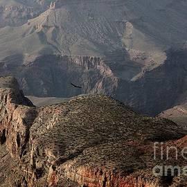 Erica Hanel - Condors in the Canyon