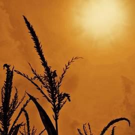 David Dehner - Corn Field Haze