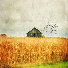 Darren Fisher - Corn Fields of Kentucky