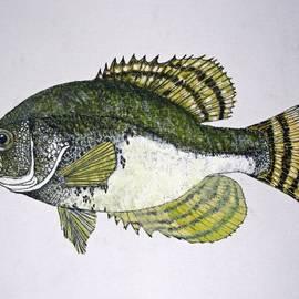 Don Seago - Crappie Fish of USA
