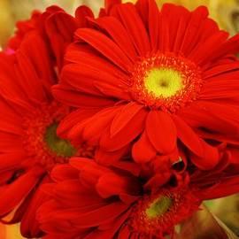 Bruce Bley - Crimson Love