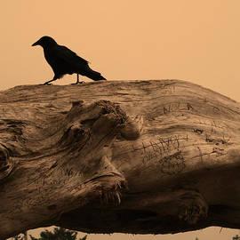 Kym Backland - Crow Silhouette