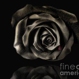 Danuta Bennett - Crying Black Rose