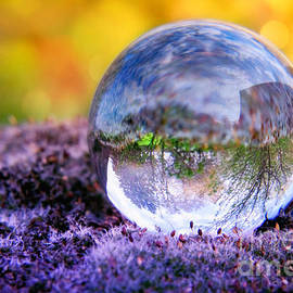 Viaina     - CRYSTAL BALL - In the moss II